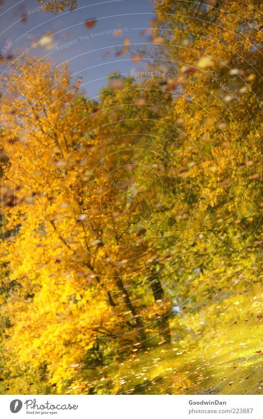 Herbstspiegel Umwelt Natur Wetter Pflanze Baum Blatt Park Teich schön viele Gefühle Stimmung Farbfoto Außenaufnahme Menschenleer Tag Reflexion & Spiegelung