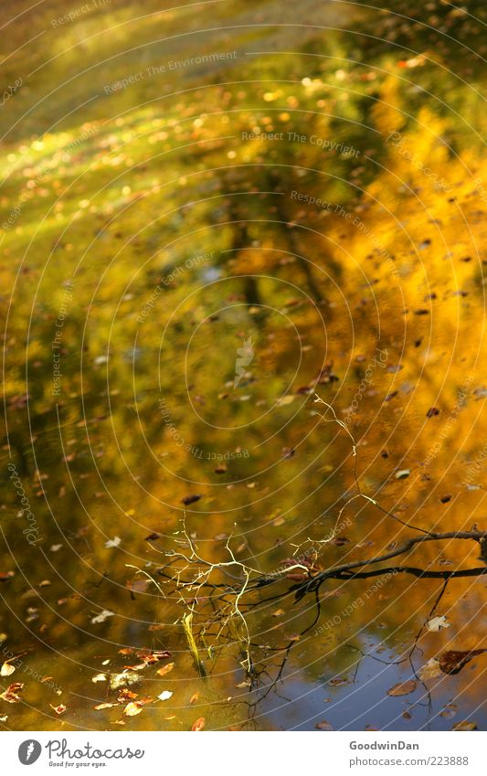 Herbstspiegel II Umwelt Natur Wasser Wetter Schönes Wetter Blatt nass natürlich schön Gefühle Stimmung Farbfoto Außenaufnahme Menschenleer Tag