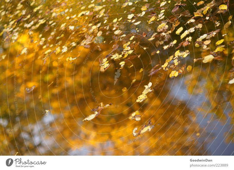 Herbstspiegel III Umwelt Natur Wasser Schönes Wetter Blatt frisch glänzend nah nass schön Gefühle Stimmung Farbfoto Außenaufnahme Menschenleer Tag