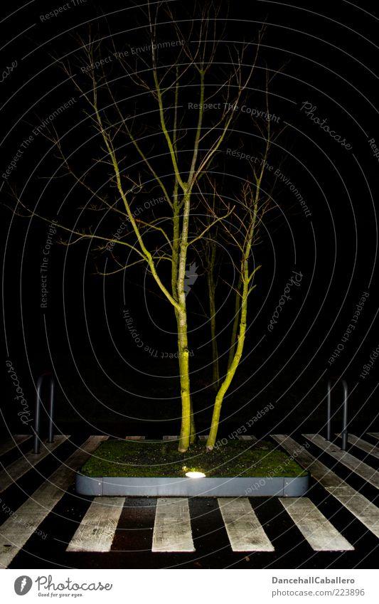 light-flooded tree Natur weiß grün Stadt Baum schwarz ruhig Straße Wiese Leben Herbst Gras Wege & Pfade Stil Lampe Klima