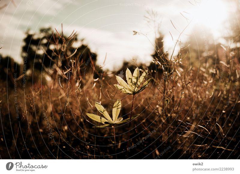 Einst Natur Pflanze Landschaft Umwelt Frühling klein Garten Wachstum authentisch Sträucher Schönes Wetter zart nah dünn Stengel unten