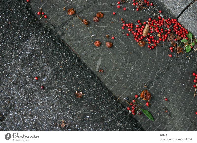 Beerendreck Umwelt Herbst kalt grau rot Natur Vergänglichkeit Straße Bordsteinkante herbstlich gefallen liegen Frucht unten dreckig rund dunkel Farbfoto