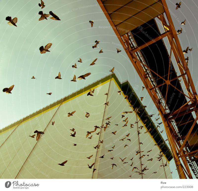 Hamburg Bird Traffic Luft Himmel Schönes Wetter Industrieanlage Fabrik Brücke Bauwerk Gebäude Mauer Wand Tier Vogel Taube Tiergruppe Schwarm fliegen eckig hoch