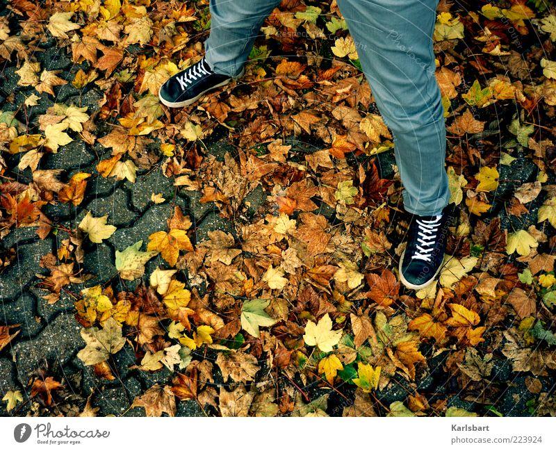 herbstspreizen. Mensch Blatt Farbe Herbst Beine Mode Schuhe stehen einzigartig Hose Herbstlaub Turnschuh lässig Bildausschnitt Anschnitt