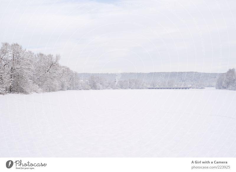 all thing white and beautiful Umwelt Natur Landschaft Winter Schnee Feld Wald hell kalt schön weiß Romantik Baum bedeckt ruhig breit Außenaufnahme