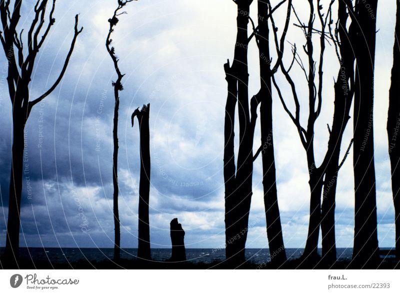 Gespensterwald Natur Ferien & Urlaub & Reisen blau Sommer Wasser Baum Meer Landschaft Wolken Strand Wald Küste Deutschland Freizeit & Hobby trist Europa