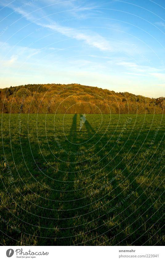 Shadows picking Flowers Mensch Himmel Natur schön grün blau Pflanze Sommer Wald Wiese Herbst Landschaft Gras Paar frei stehen