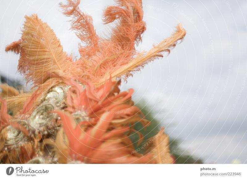 Boahh Accessoire Gefühle Feder Karneval Farbfoto Außenaufnahme Textfreiraum rechts Tag Unschärfe Detailaufnahme Anschnitt Bildausschnitt Kopfschmuck