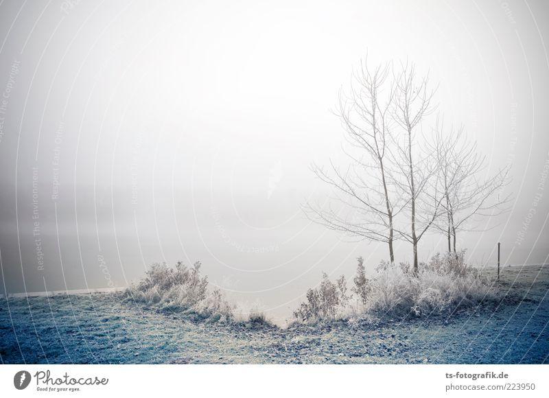 Frozen Landscape II Umwelt Natur Landschaft Pflanze Urelemente Luft Wasser Winter schlechtes Wetter Nebel Eis Frost Baum Gras Sträucher Seeufer Flussufer