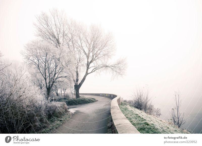 Frozen landscape IV Umwelt Natur Landschaft Pflanze Urelemente Luft Winter Nebel Schnee Baum Seeufer Flussufer kalt grün weiß Raureif Deich Damm Wege & Pfade