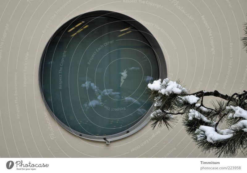Und dahinter das Meer? Fenster Pflanze Winter Schnee Nadelbaum Japan Mauer Wand Beton Glas träumen ästhetisch rund Gefühle Kraft ruhig Reinheit Sehnsucht
