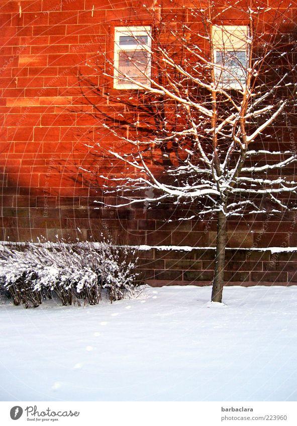 On the Bright Side of Life Natur Sonnenlicht Winter Schönes Wetter Schnee Baum Sträucher Haus Gebäude Mauer Wand Fenster frieren hell kalt Geborgenheit