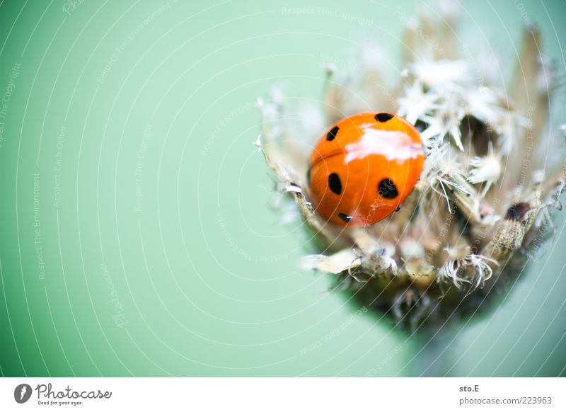 Ma' riechn Käfer? Natur Pflanze Sommer Blume ruhig Tier Blüte Gras Umwelt Frühling klein glänzend Wachstum nah Insekt Punkt
