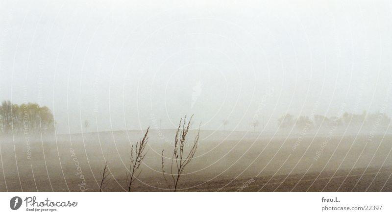 Nebelfelder 2 Natur Baum Strand Ferien & Urlaub & Reisen Gras Traurigkeit Landschaft Feld Küste Nebel Sträucher zart Ostsee April poetisch Mecklenburg-Vorpommern