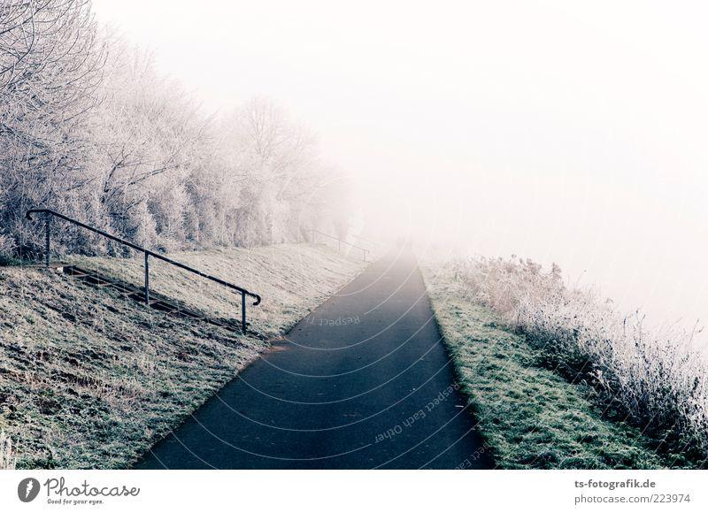 Road to Nowhere Umwelt Natur Landschaft Pflanze Urelemente Winter Wetter Nebel Eis Frost Schnee Baum Gras Sträucher Wiese Ferne grün weiß Raureif Wege & Pfade