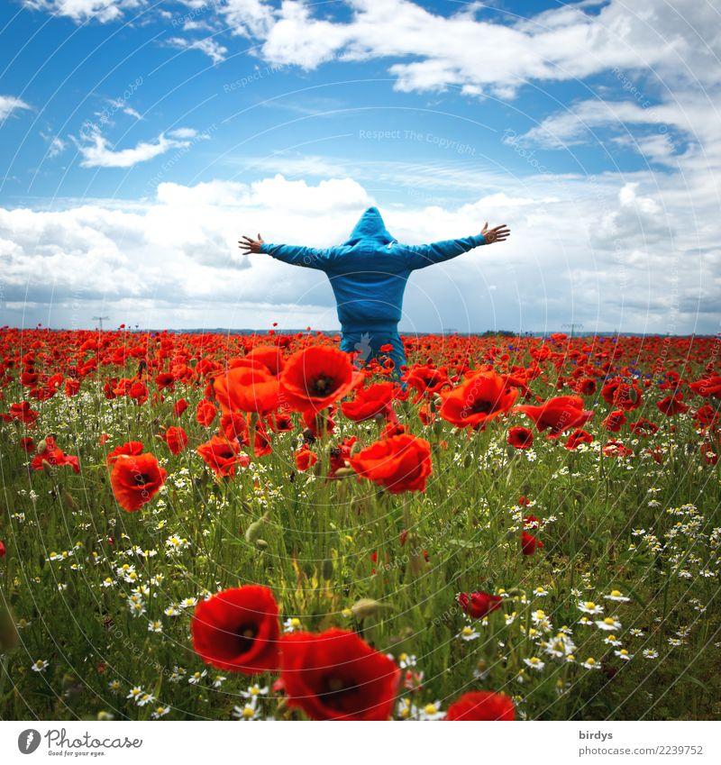 Mohnblumenmeer Mensch Himmel Pflanze blau Sommer Blume rot Freude Leben feminin Glück außergewöhnlich Horizont leuchten maskulin träumen