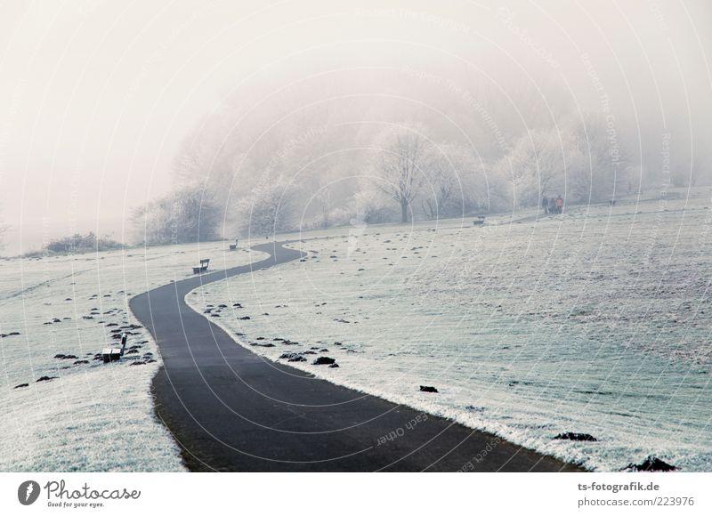 Road to Nowhere II Umwelt Natur Landschaft Pflanze Urelemente Erde Luft Winter Klima Wetter Nebel Eis Frost Schnee Baum Sträucher Wiese Wald kalt grau grün weiß