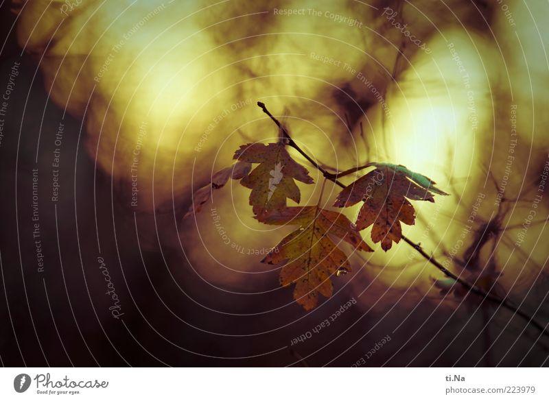 Abendsonne Umwelt Natur Landschaft Tier Sonnenaufgang Sonnenuntergang Herbst Winter Schönes Wetter Pflanze Blatt Wildpflanze hängen leuchten kalt natürlich gelb