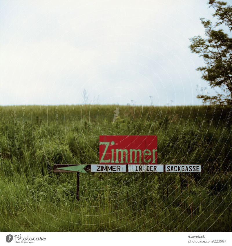 untitled 6 Himmel grün blau Pflanze Leben Wiese Landschaft Gras grau Schilder & Markierungen trist Sträucher authentisch Hinweisschild Pfeil Gastronomie