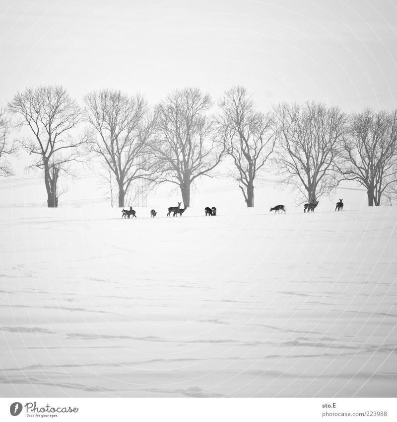 futtersuche Natur Landschaft Pflanze Tier Horizont Winter Klima Klimawandel Wetter Eis Frost Schnee Wiese Feld Wildtier Tiergruppe Herde Tierpaar Tierjunges