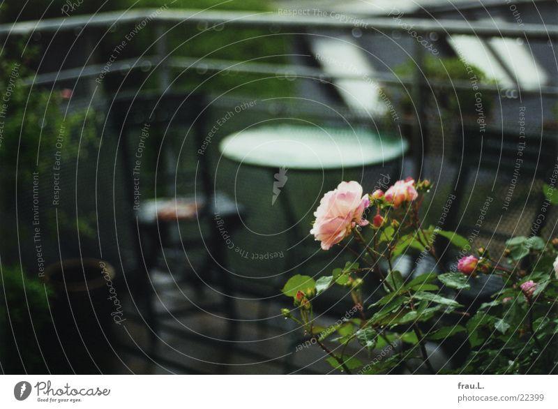 Rose im Regen Balkon rosa grün Blume Tisch nass Romantik Dach Wassertropfen Geländer Blühend Stuhl terasse