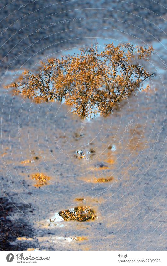 versunkener Herbst Umwelt Natur Pflanze Wasser Schönes Wetter Baum Blatt Ast Straße Pfütze Asphalt authentisch einzigartig nass natürlich blau braun gelb grau