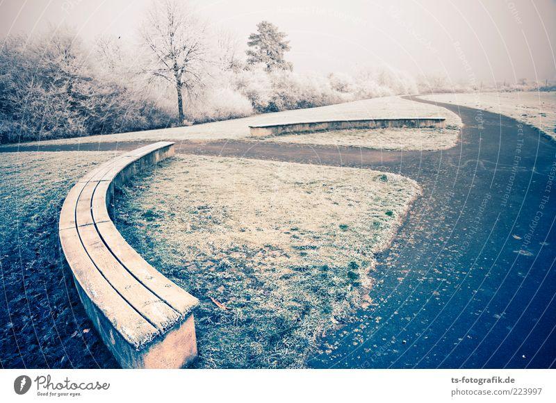 Leere auf der Ersatzbank Umwelt Natur Landschaft Pflanze Urelemente Horizont Winter Nebel Eis Frost Schnee Baum Wiese kalt rund blau grün weiß Parkbank Bank