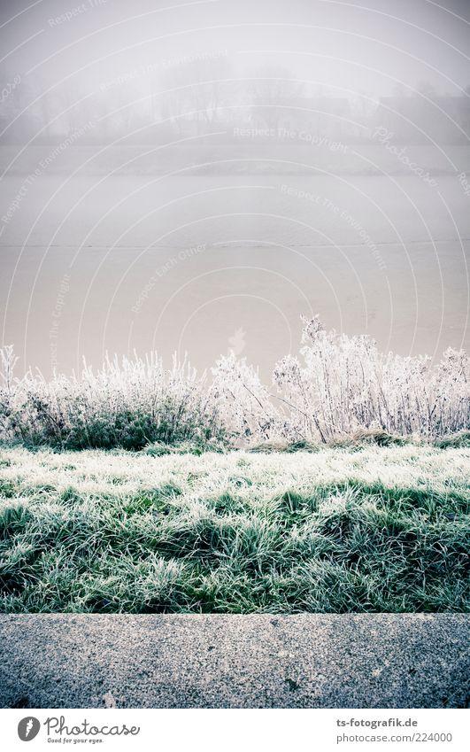 Raureifenwechsel Umwelt Natur Landschaft Pflanze Urelemente Horizont Winter Wetter Nebel Eis Frost Schnee Gras Sträucher Küste Seeufer Flussufer Teich kalt grau