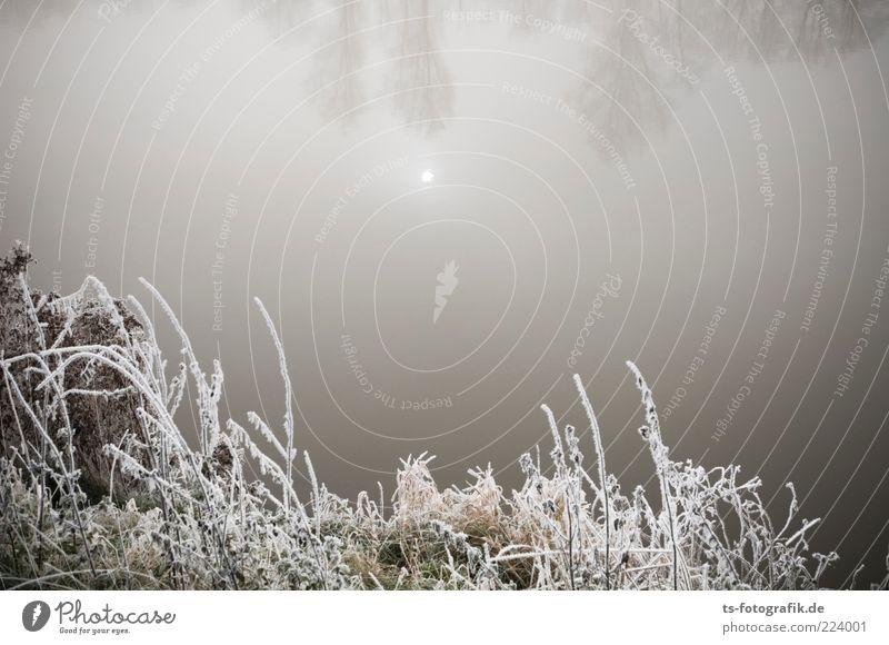 Stille Umwelt Natur Landschaft Pflanze Urelemente Wasser Himmel Sonne Winter Nebel Eis Frost Sträucher Seeufer Flussufer Teich kalt braun grau weiß Raureif