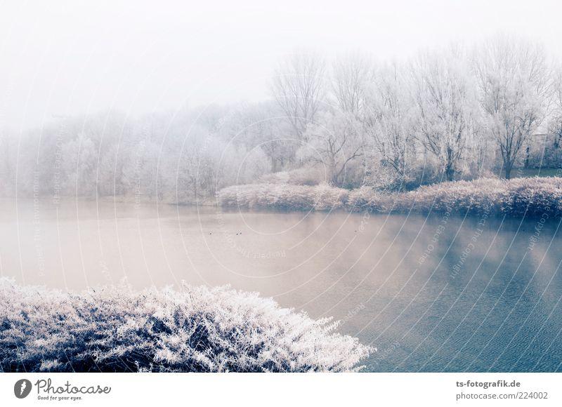 Puderzuckersee Umwelt Natur Landschaft Pflanze Urelemente Wasser Winter Nebel Eis Frost Baum Sträucher Wald Seeufer Flussufer kalt blau silber weiß Raureif