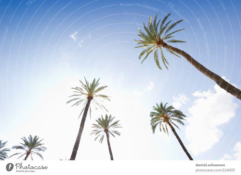 nein, ist nicht am Schauinsland !! Ferien & Urlaub & Reisen Sommer Himmel Klima Schönes Wetter Baum hell Palme Licht Sonnenlicht Sonnenstrahlen Gegenlicht