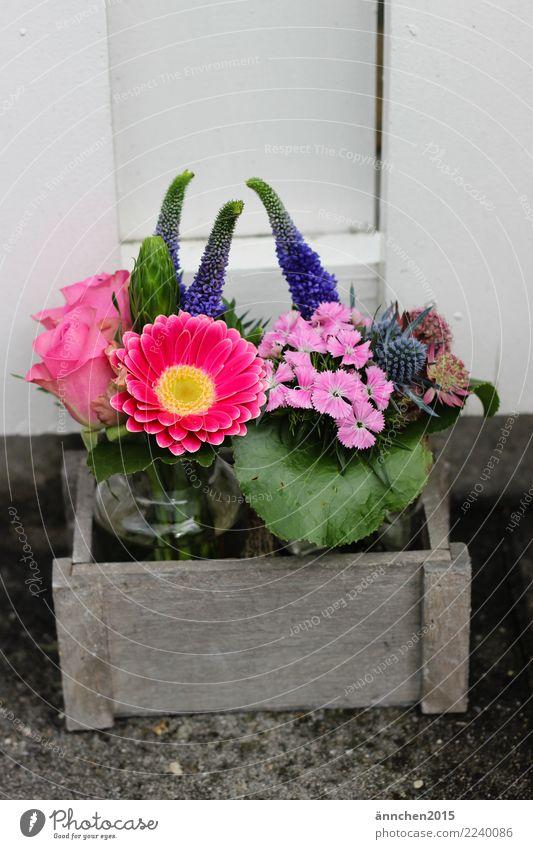 Blumen Natur grün Holz rosa Geschenk violett Rose Blumenstrauß Vase Korb pflücken Souvenir