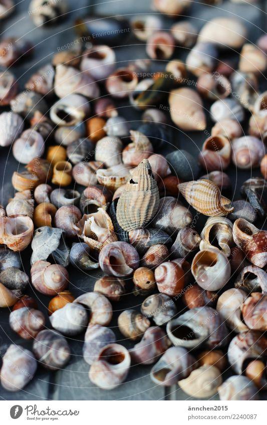 Schneckenhaussuche Wasser Meer Suche Sammlung finden Muschel