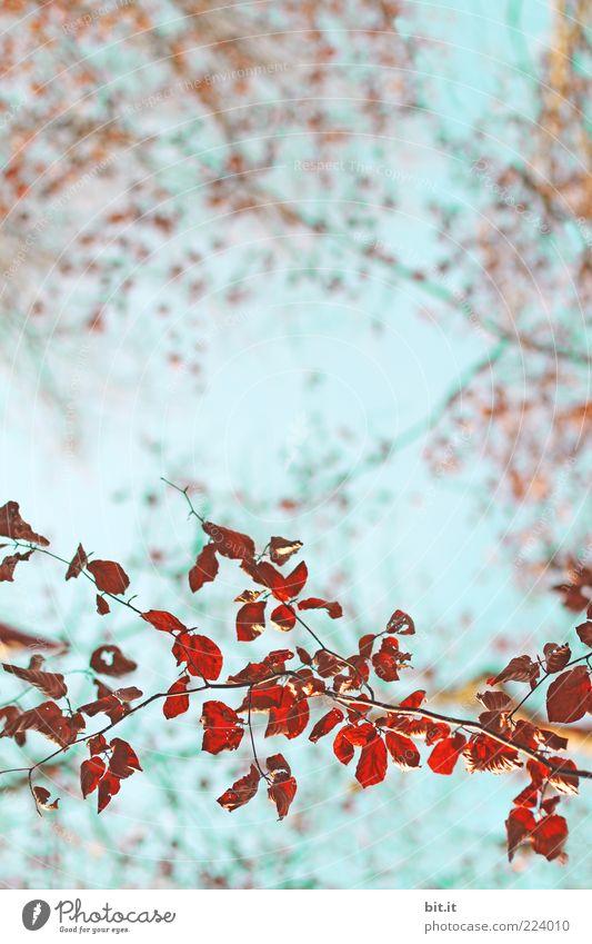 Muster-Zweig Ferien & Urlaub & Reisen Umwelt Natur Pflanze Luft Wolkenloser Himmel Sommer Herbst Wetter Baum Blatt Zeichen Ornament natürlich blau rot