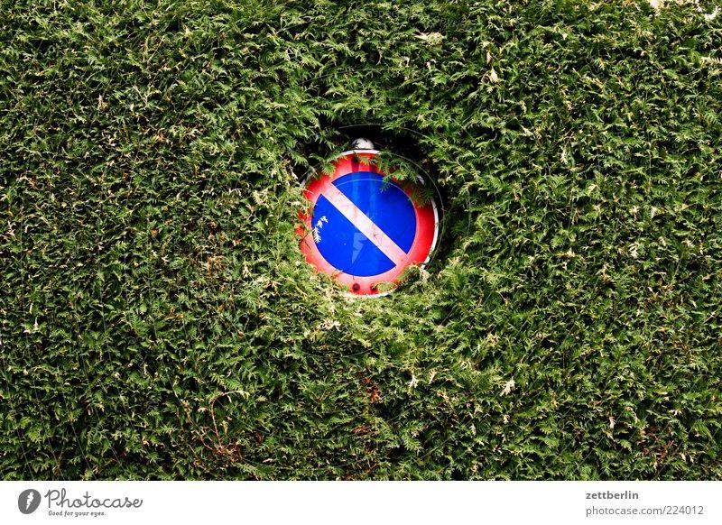 Eingeschränktes Halteverbot Verkehrszeichen Verkehrsschild grün Hecke Lücke Loch Konifere Schilder & Markierungen Parkverbot Verbote Farbfoto Außenaufnahme