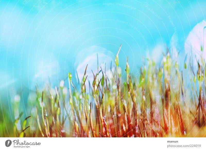 grell und schrill Pflanze Moos Kitsch klein verrückt Farbfoto Außenaufnahme Nahaufnahme Tag mehrfarbig Blauer Himmel Stengel Menschenleer Textfreiraum oben
