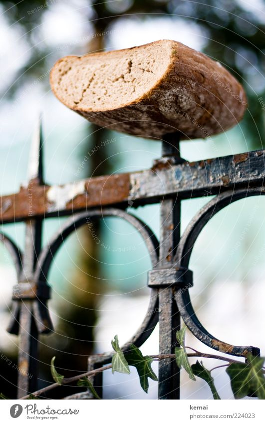 Vogelfutter Lebensmittel Teigwaren Backwaren Brot Ernährung Picknick Zaun Zaunpfahl Spitze verrückt füttern Futter Winter außergewöhnlich Rost Spieß Farbfoto