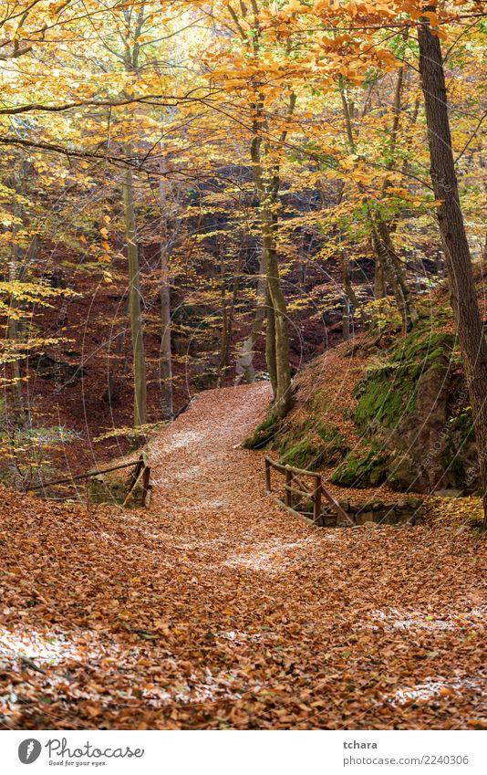 Herbst Park schön Umwelt Natur Landschaft Pflanze Baum Blatt Wald Brücke Straße Wege & Pfade hell natürlich neu gelb gold grün rot Farbe fallen Hintergrund