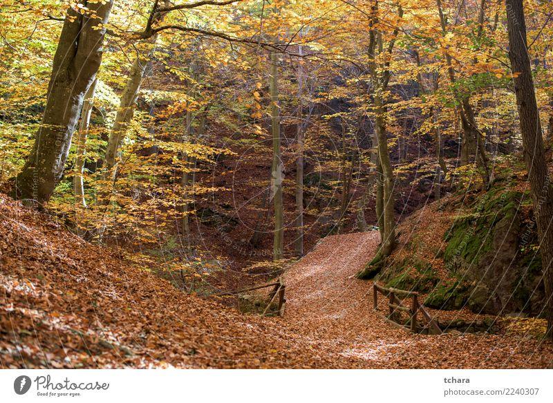 Herbst Park schön Umwelt Natur Landschaft Pflanze Baum Blatt Wald Straße Wege & Pfade hell natürlich neu gelb gold grün rot Farbe fallen Hintergrund farbenfroh