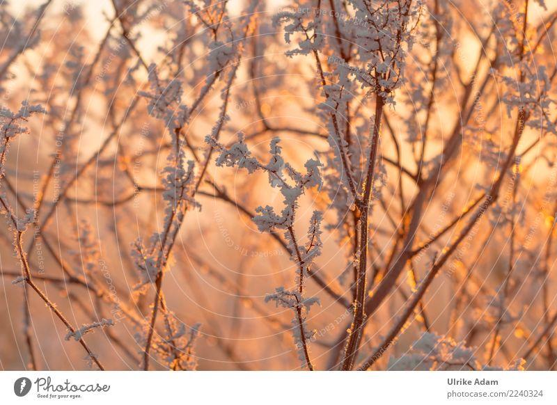 Raureif Natur Weihnachten & Advent Pflanze schön Baum Erholung ruhig Winter kalt Schnee Zufriedenheit Eis glänzend Ast Romantik Wohlgefühl