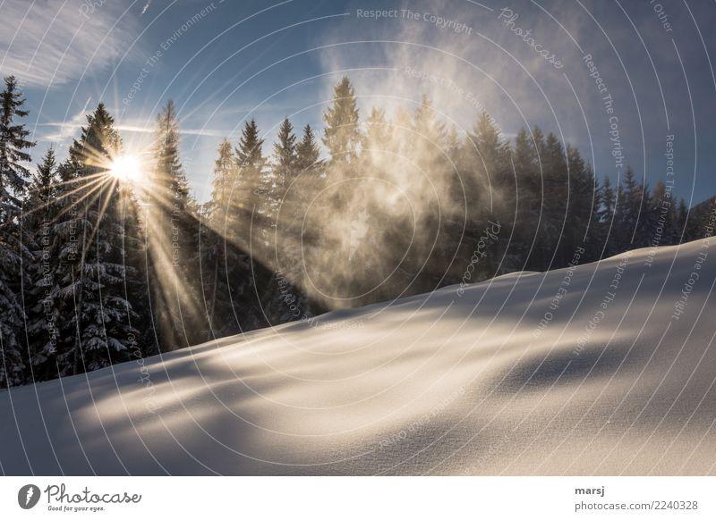 Wohlfühl Winterzauber Leben harmonisch Sinnesorgane ruhig Meditation Schnee Winterurlaub Schönes Wetter Eis Frost leuchten Nebelschleier Sonnenstrahlen Wald