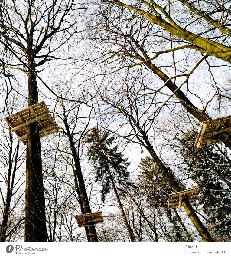 Das Ende eines Zauberwaldes Umwelt Natur Landschaft Winter Baum Wald hoch Perspektive Hochseilgarten Plattform Holz Hochsitz Kletteranlage Kletterbaum Baumkrone