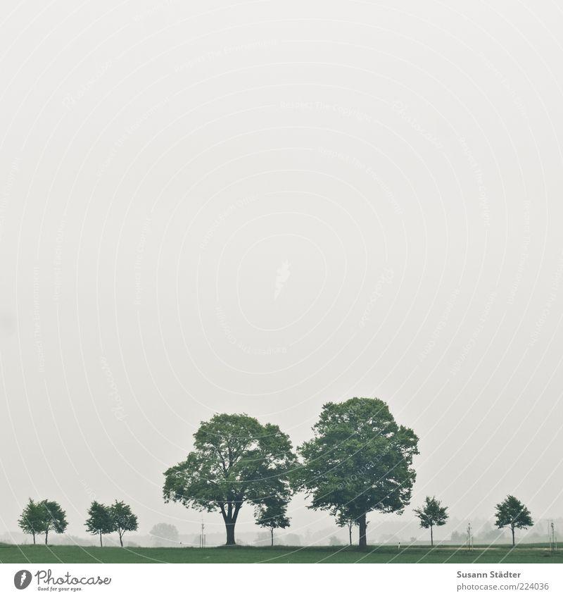 gleichsam Baum Grünpflanze Ferne frei Baumreihe Natur Wiese Feld Farbfoto Wolkenloser Himmel schlechtes Wetter Außenaufnahme Menschenleer Textfreiraum links
