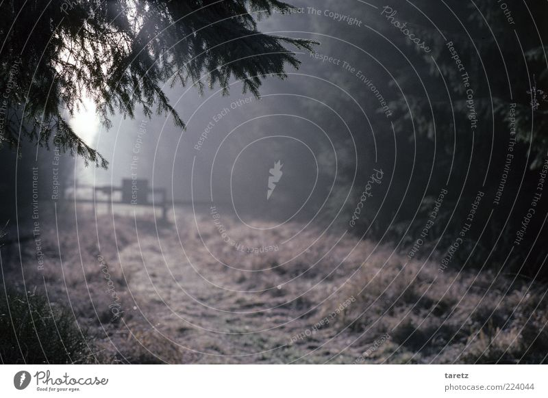 Grenzerfahrung Natur kalt dunkel Wiese Herbst Gras grau Umwelt Wege & Pfade Nebel frei Hoffnung Zukunft Ziel geheimnisvoll Grenze