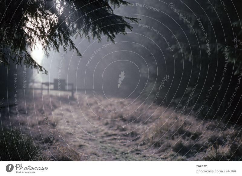 Grenzerfahrung Umwelt Natur frei Sonnenstrahlen Schlagbaum Fußweg Waldrand verstecken verborgen kalt Nebel geheimnisvoll Hohes Venn Nadelwald dunkel Erkenntnis