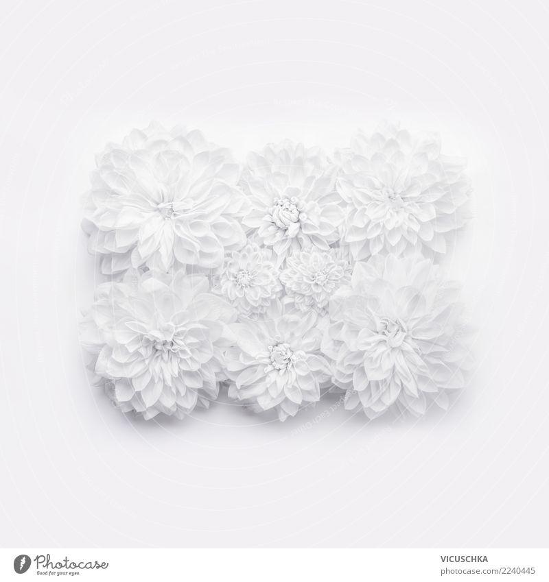 Weße Blumen auf weiß Stil Design Dekoration & Verzierung Veranstaltung Feste & Feiern Valentinstag Muttertag Hochzeit Geburtstag Pflanze Blatt Blüte