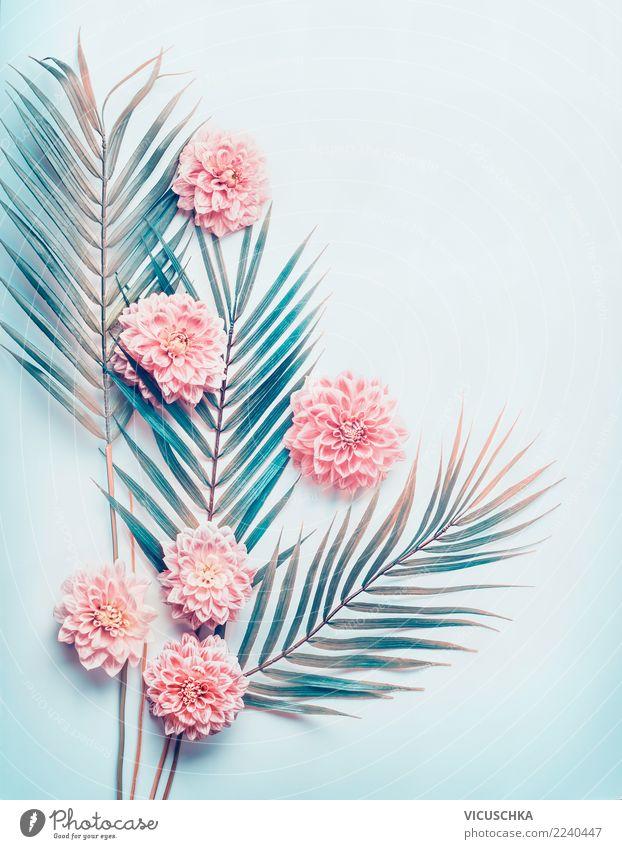 Layout mit tropischen Palmblättern und pastellrosa Blüten Natur Pflanze blau Blume Blatt Hintergrundbild Stil Design trendy türkis Schreibtisch Palme Entwurf