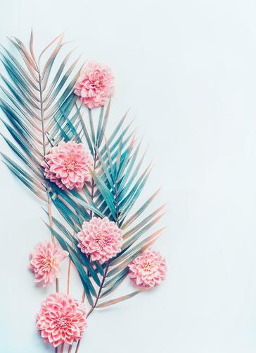 Kreatives Layout mit tropischen Palmblättern und Blüten Natur Pflanze Hintergrundbild Stil rosa Design planen Lebewesen trendy Schreibtisch Top Entwurf Hipster