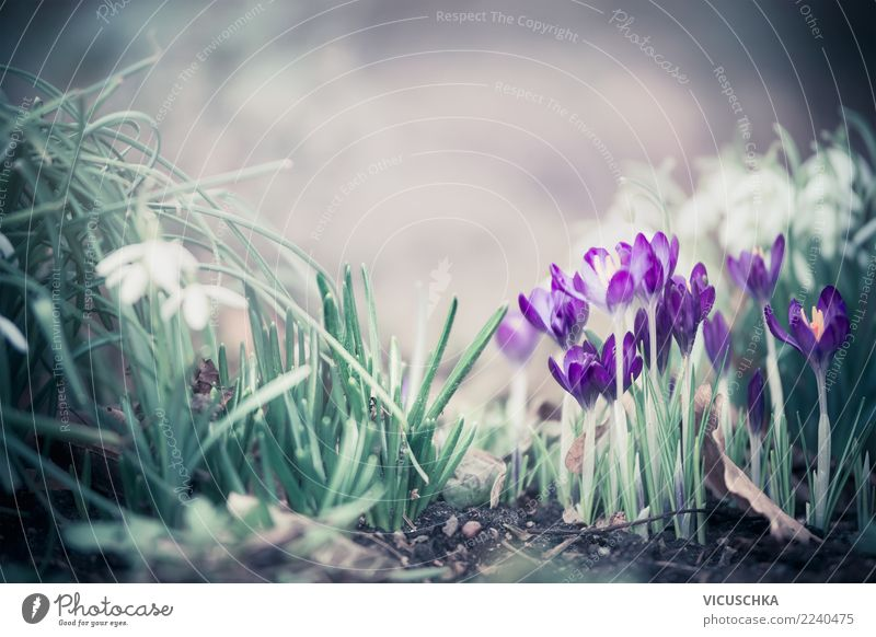 Frühjahr Blumen im Garten Design Freizeit & Hobby Natur Pflanze Frühling Blatt Blüte Park Wiese Wald Krokusse Schneeglöckchen Frühlingsgefühle Frühlingsblume