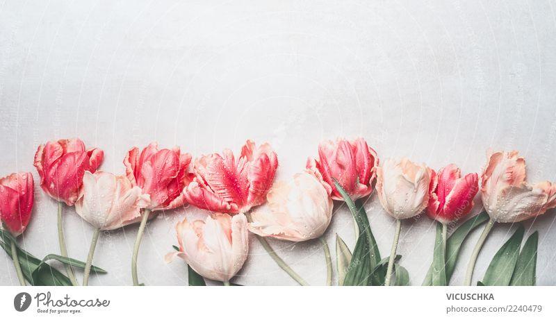 Tulpen Blumen mit Wassertropfen Stil Design Feste & Feiern Valentinstag Muttertag Hochzeit Geburtstag Pflanze Frühling Dekoration & Verzierung Blumenstrauß